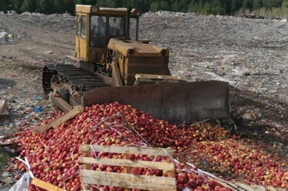 25 тонн яблок неизвестного происхождения уничтожено в Тверской области.