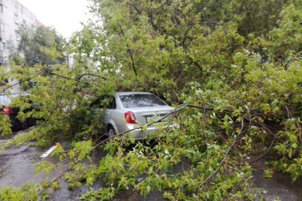 В Твери дерево рухнуло на проезжающий мимо автомобиль.