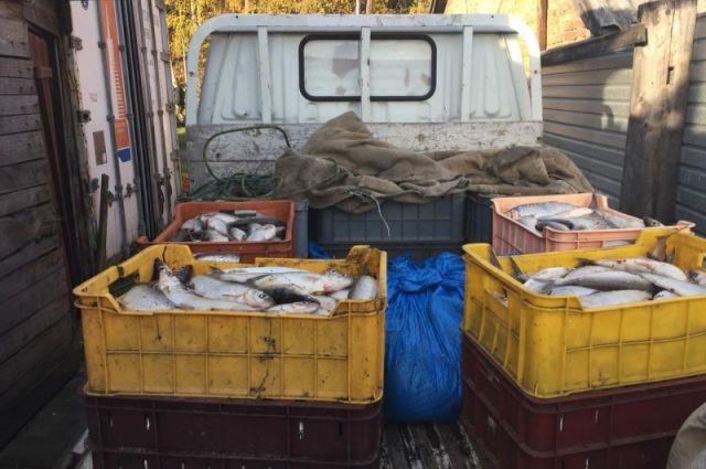 25 июня в Приангарье завершился период запрета вылова ценных видов рыб.