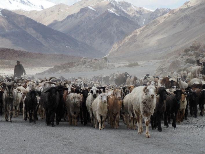Животные Средней Азии
