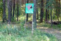 Лесники просят сообщать о нарушениях правил пожарной безопасности в лесу.
