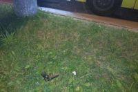 Молодой человек открыл стрельбу из пистолета в маршрутке во Львове.