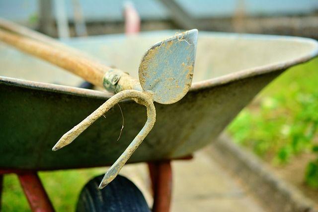 От сорняков лучше поможет не тяпка, а садовые ножницы