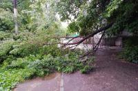 Рядом с музыкальной школой в Кировском районе сломана большая тяжелая ветка дерева, которая перегородила пешеходный тротуар поперек.