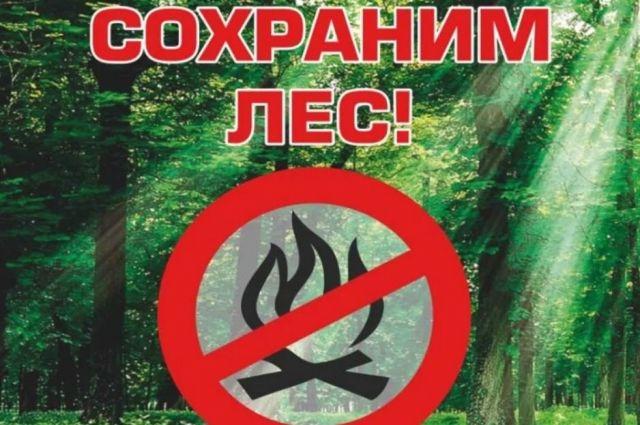 Жителям Тюмени напоминают о соблюдении правил пожарной безопасности в лесу