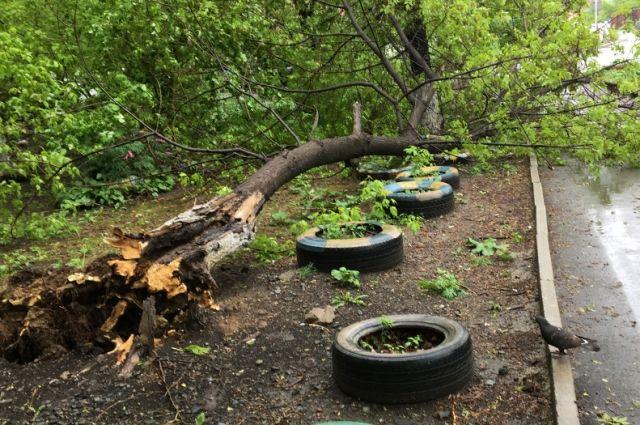 На Ямале ветер сносил крыши с домов и валил деревья.