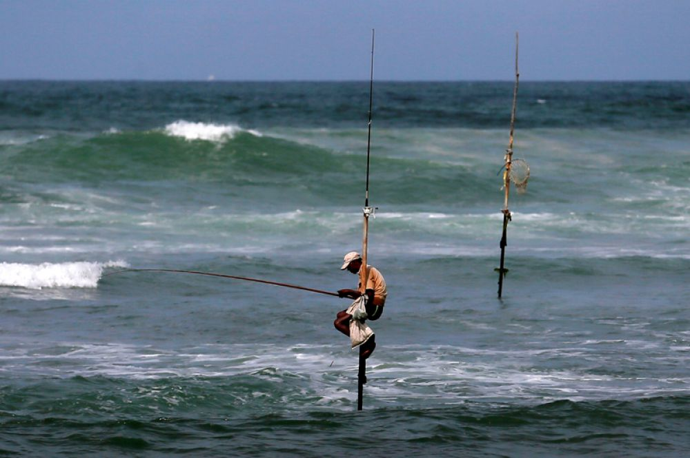 Рыбак на сваях в Коггале, Шри-Ланка.