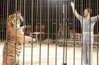 Трагедия на арене: четыре тигра загрызли всемирно известного дрессировщика