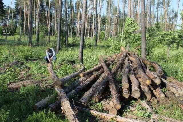 В лесной отрасли края следует навести порядок