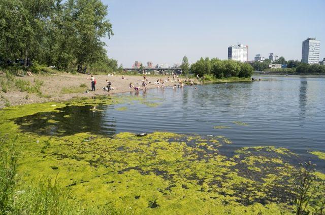 От жителей Красноярска поступает много обращений по поводу крайне неприятного запаха, невозможности купаться в протоке.