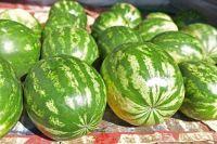 Тюменцам рекомендуют не есть ранние арбузы
