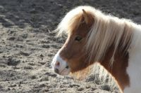 В Тюмени участились случаи травмирования детей при катании на лошадях