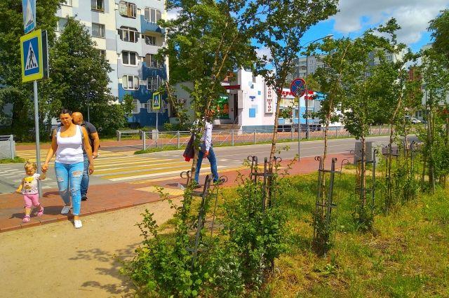 Хочется, чтобы на улицах радовали глаз полноценные деревья, а не чахлые кустики.