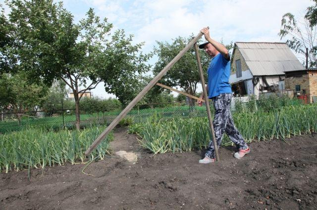 Более восьми тысяч земельных участков получили тюменские многодетные семьи