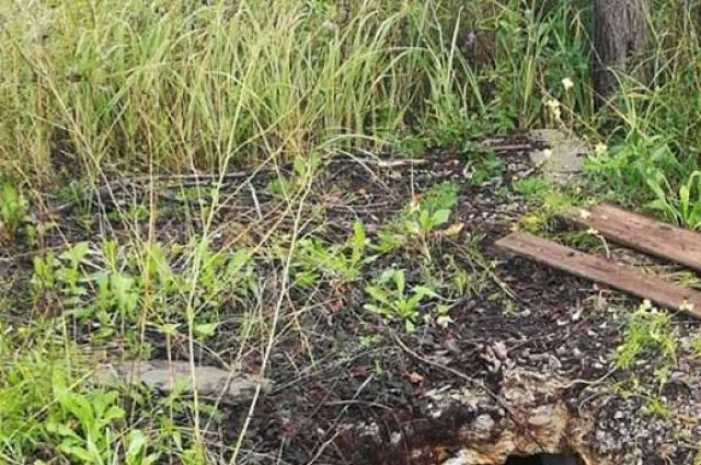 В Тобольске собака провалилась в странную дыру в земле