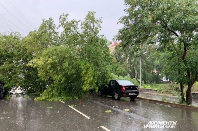 В сквере Уральских добровольцев и около него сильный ветер повалил много деревьев.