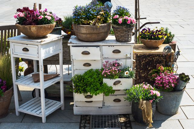 Домашние растения требуют серьезного ухода.