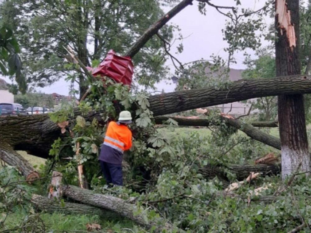 Спасатели работают в Ужгородском районе уже несколько дней - убирают деревья, упавшие на линии электропередач и на дороги.