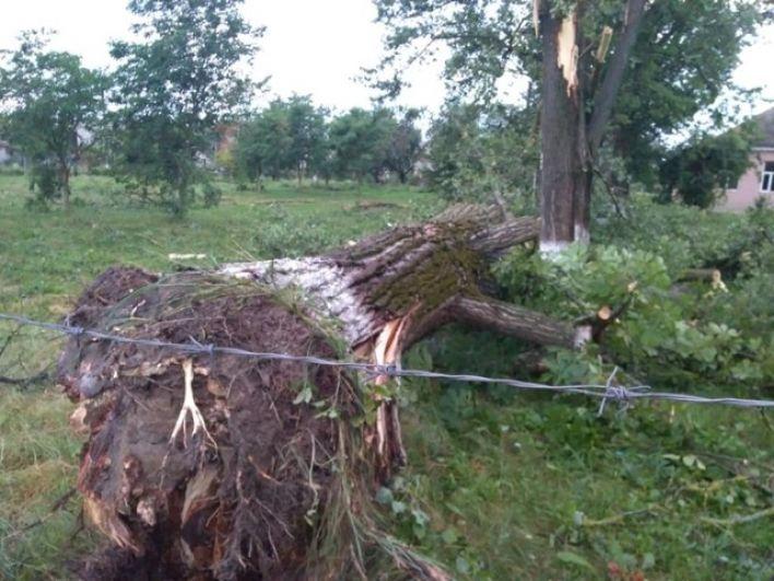 10 июля вблизи Сюртэ и в других местах Ужгородского района прошел мощный смерч, который буквально с корнями выдрал деревья и бросил их на землю.