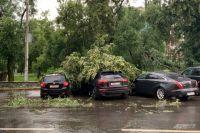 Деревья падали на припаркованные автомобили.
