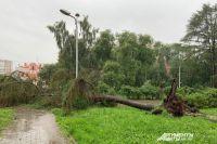 Сильный ветер повалил деревья в центре Перми.