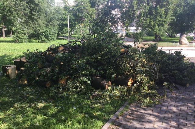 В сквере Уральских добровольцев ураган повалил множество деревьев.