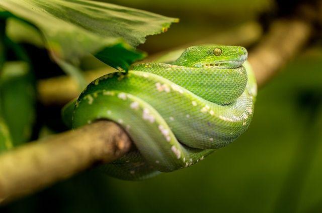 Теперь держать в доме опасных змей запрещено.