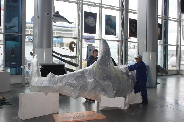В Музее Мирового океана появилась большая белая акула