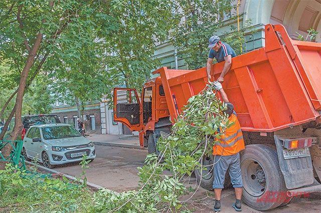 Сотрудники ГБУ «Жилищник» обрезают ветви разросшихся деревьев  во дворе.