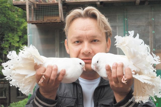 На тюменских дачах поселились лесные голуби