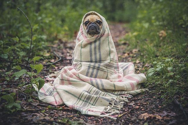 В омском САХ собакам оборудуют ветеринарный блок