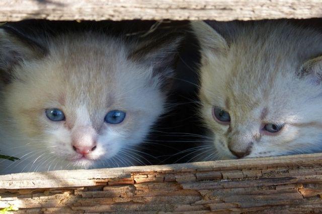 Котятам всего около месяца, одной их кошек – около года. В непроветриваемом помещении с хлоркой животные могут умереть.