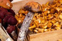 Тюменцам рекомендуют собирать только известные грибы