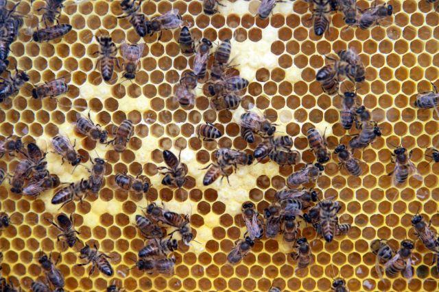 Причиной массовой гибели пчел в Удмуртии стали ядохимикаты