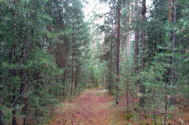 Грибники всю ночь провели в лесу голодные и замёрзшие.