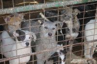 В УК РФ есть ст. 245, которая предполагает уголовную ответственность за жестокое обращение с животными.
