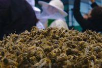 В массовой гибели пчел в Тюменской области виноваты яды