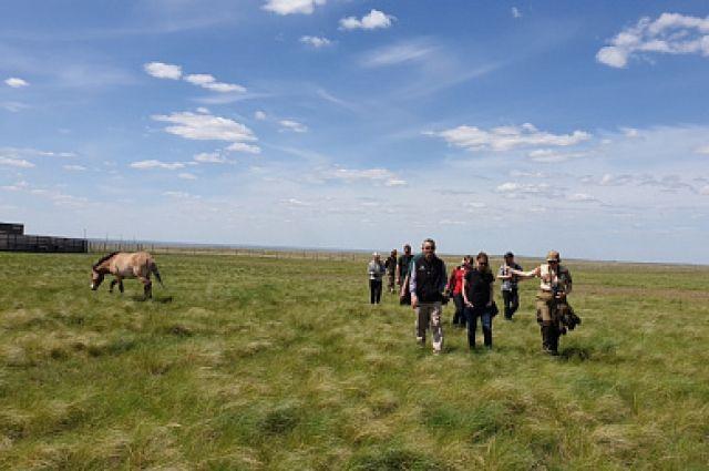 В Оренбуржье из США привезут группу лошадей Пржевальского