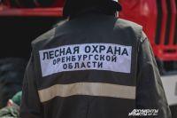 В Оренбургской области половина пожаров происходит на территории лесов.