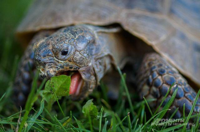 Рептилию, плавающую в водоёме в Черняевском лесу, заметили местные жители.