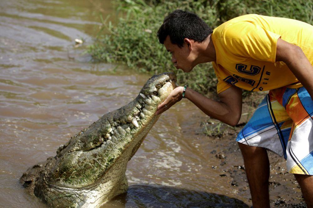 Костариканец Хуан Сердас, чье хобби — кормить крокодилов, целует одного из них в реке Тарколес, Коста-Рика.