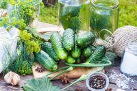 Зеленый корнеплод на 95% состоит из воды.