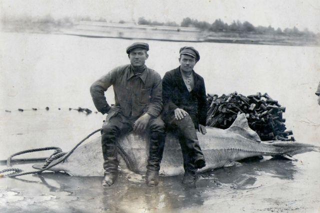 Хозяйственная деятельность человека почти уничтожила ценные породы рыб в Дону
