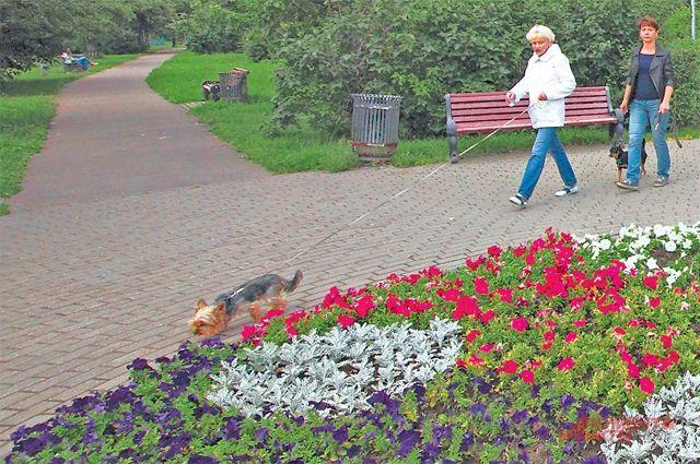 В жаркую изасушливую погоду цветники должны поливать– смашин или излеек.