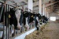В Уватском районе откроется ферма по разведению породистых коров