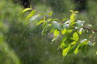 Дожди, грозы и порывистый ветер снова придут в город Новосибирск.