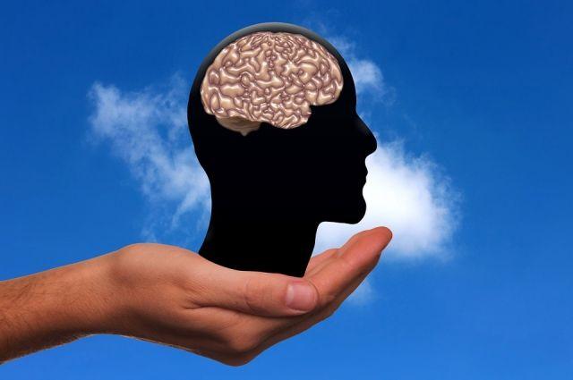 Мозг человека в среднем весит от 1100 до 1500 гр.