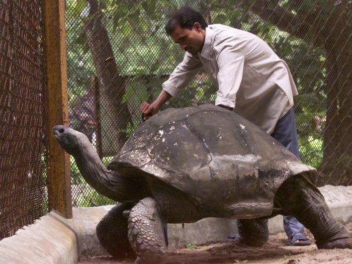 Черепаха Джонатан в этом году отметил 187 день рождения! Таким образом, это земноводное пережило Первую и Вторую мировые войны, бомбардировку Хиросимы и многое другое! Черепаха Джонатан - самое старое животное в мире!