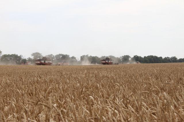 27 и 28 июля состоится сельхоз фестиваль «День балтийского поля»