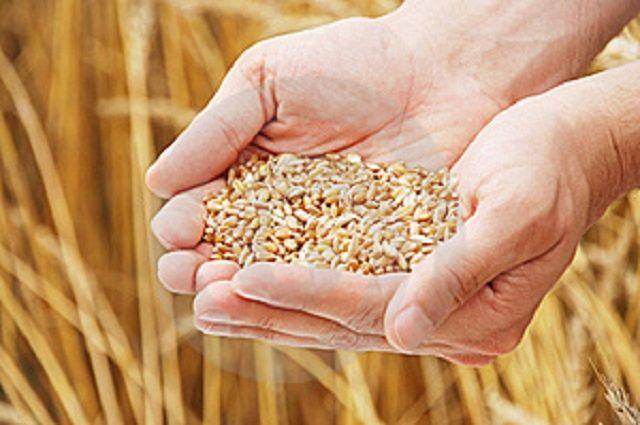 ООО «Чебулинское» занимается выращивание различных видов семян.